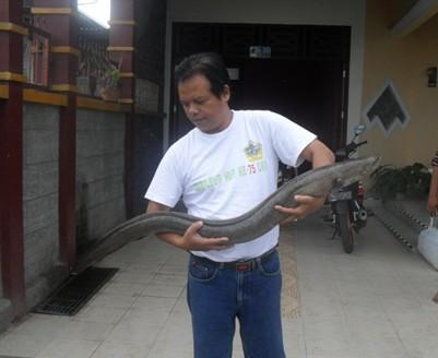 Prof Krismono bersama ikan sidat