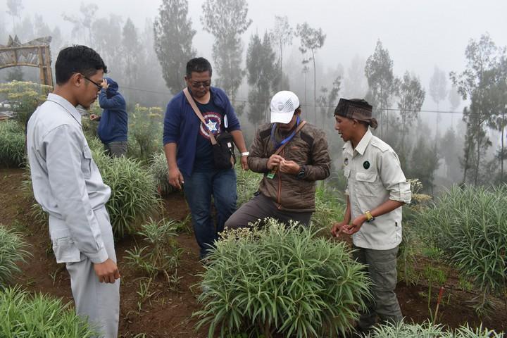 Budidaya tanaman Edelweiss