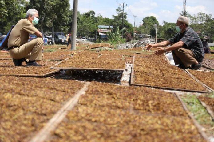 Ganjar Pranowo saat berbincang dengan petani tembakau