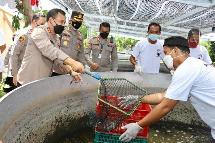 Panen ikan lele di Polsek Polokarto